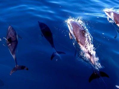 Jet Water Sports Avistamiento de Cetáceos