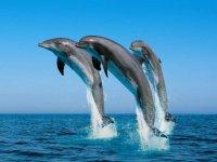 contempla el salto de los delfines