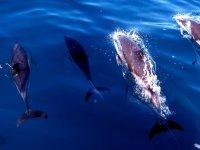 delfines saliendo a la superficie