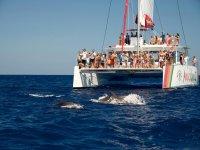 双体船上的海豚群