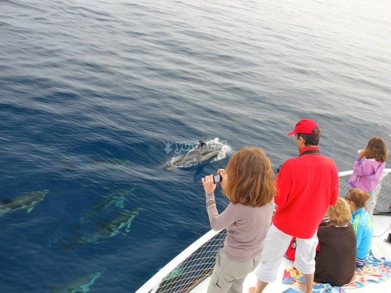 Delfines desde el barco