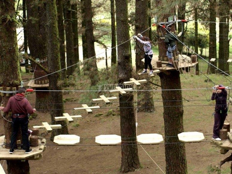 Circuito arboreo