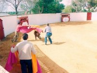 Bullfighting the steer