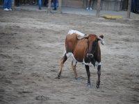 The animal in León