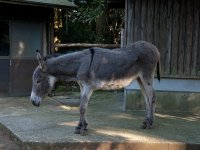 our donkey