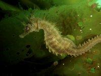 Fauna marina que vereis durrante el buceo