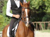 骑马的马匹