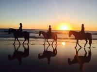 日落时在海滩上骑马的马匹