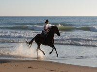 在海边的马奔腾