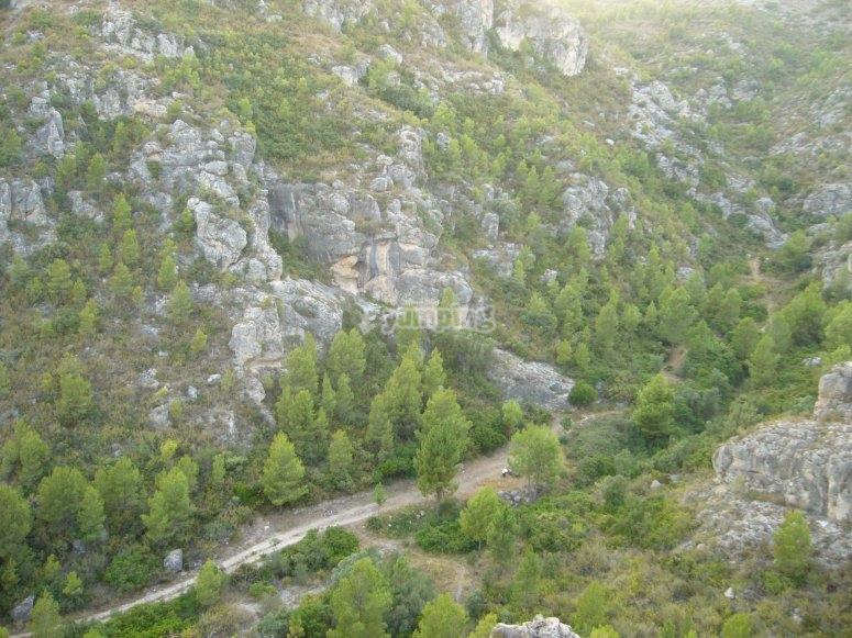 Bosques desde lo alto del valle