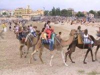 海滩上的骆驼