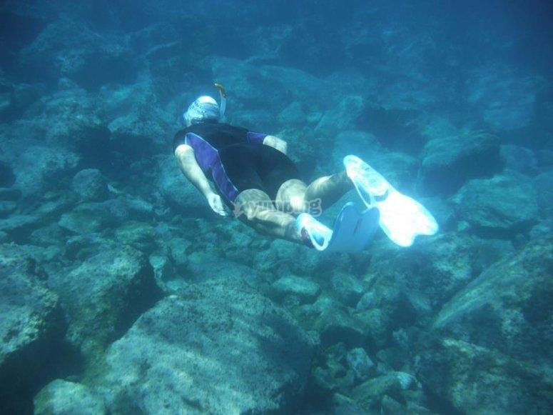En busca de especies marinas