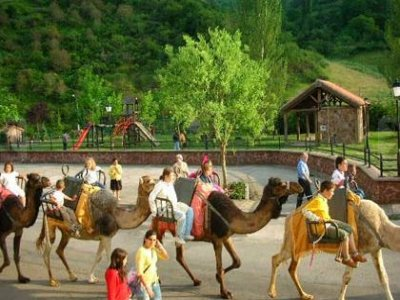 Ganados Tolubio Paseos en Camello