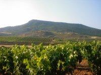 Enjoy wine tourism