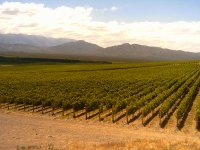 Visita los mejores viñedos