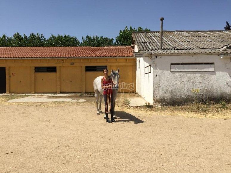 Llevando al caballo con cuerda