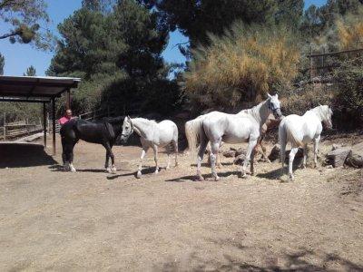 Paseo a caballo con comida en Valle de Iruelas