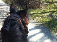 Descubriendo rutas a caballo.