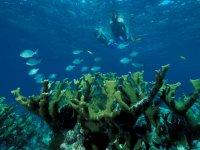 conoce el fondo marino