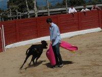 Organize capeas in Seville