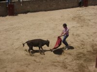 Realziar capeas en Sevilla
