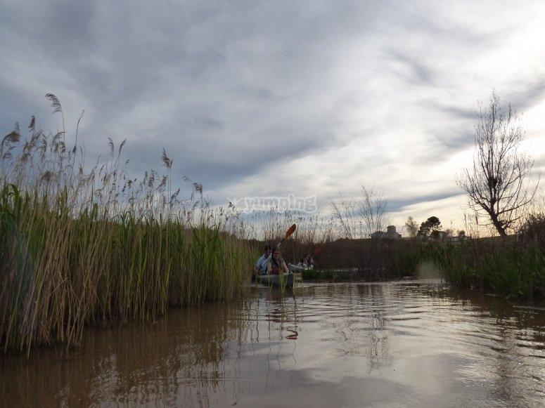 Remando en el rio
