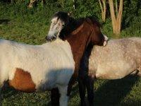 马在Goikomendi