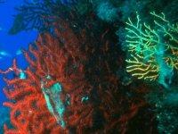 洗礼海洋动植物