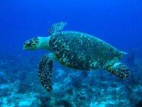 情侣水下潜水海龟女孩