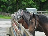 caballos esperando