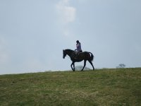 en el caballo