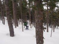 Esquiando entre arboles