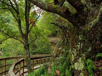 Escursione attraverso le foreste della Ribera Sacra 2 giorni