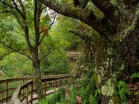 2-day hiking trip in the forests of Ribera Sacra