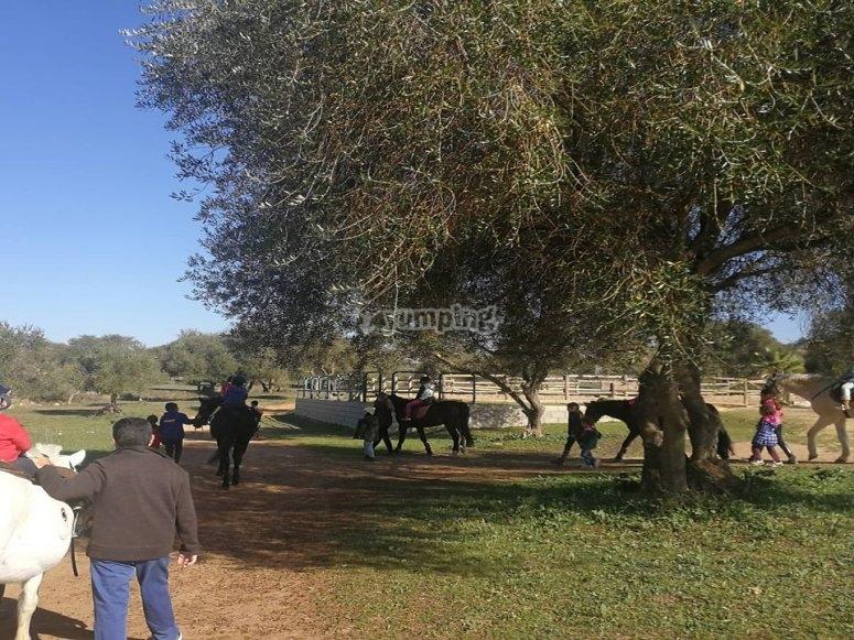 Tour a caballo en finca