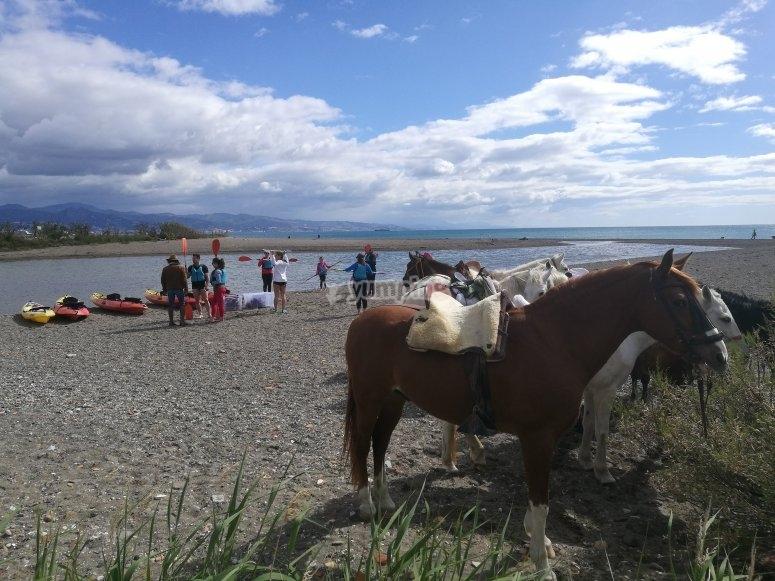 Las playas de Málaga a caballo