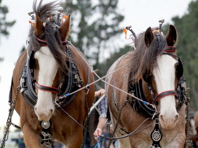 Giro in carrozza trainata da cavalli a Gandía 1 ora