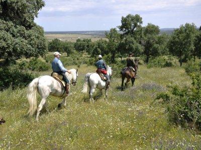 Picadero Escuela de Equitación