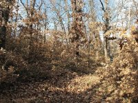 Arboles con hojas caidas