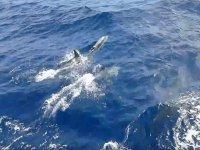 Delfines saltando en el agua