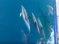 Junto a la manada de delfines