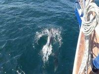 Navegando junto a delfines