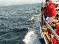 Presenciando desde el barco el nado de los delfines