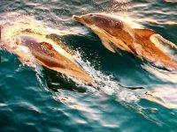 Sol reflejándose en los delfines