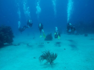 Diving course of one star FEDAS, Tarragona.