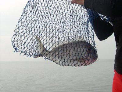 Pesca Bahia Pujol