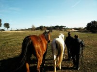 The horses of Arrandeterra