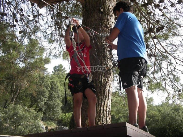 Pont dans un parc arboristique