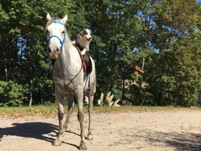 Horse-Riding Route, Beginners, Bilbao, 45 Minutes