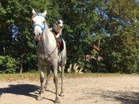 Primo contatto con i cavalli a Bilbao